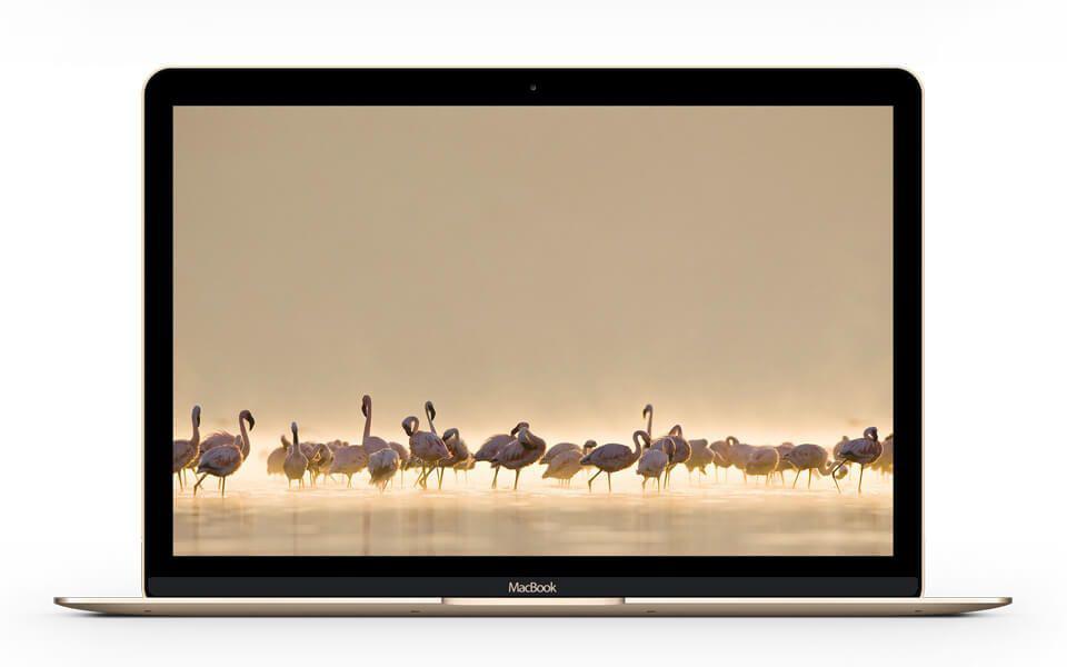 MacBook-Gold-free-mockup